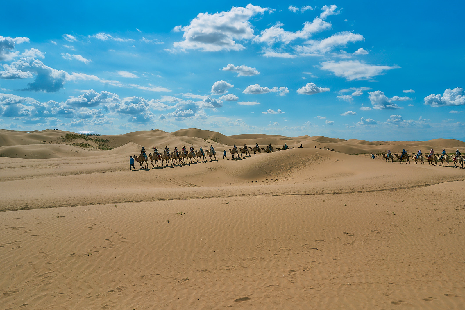 In the Kubuqi Desert